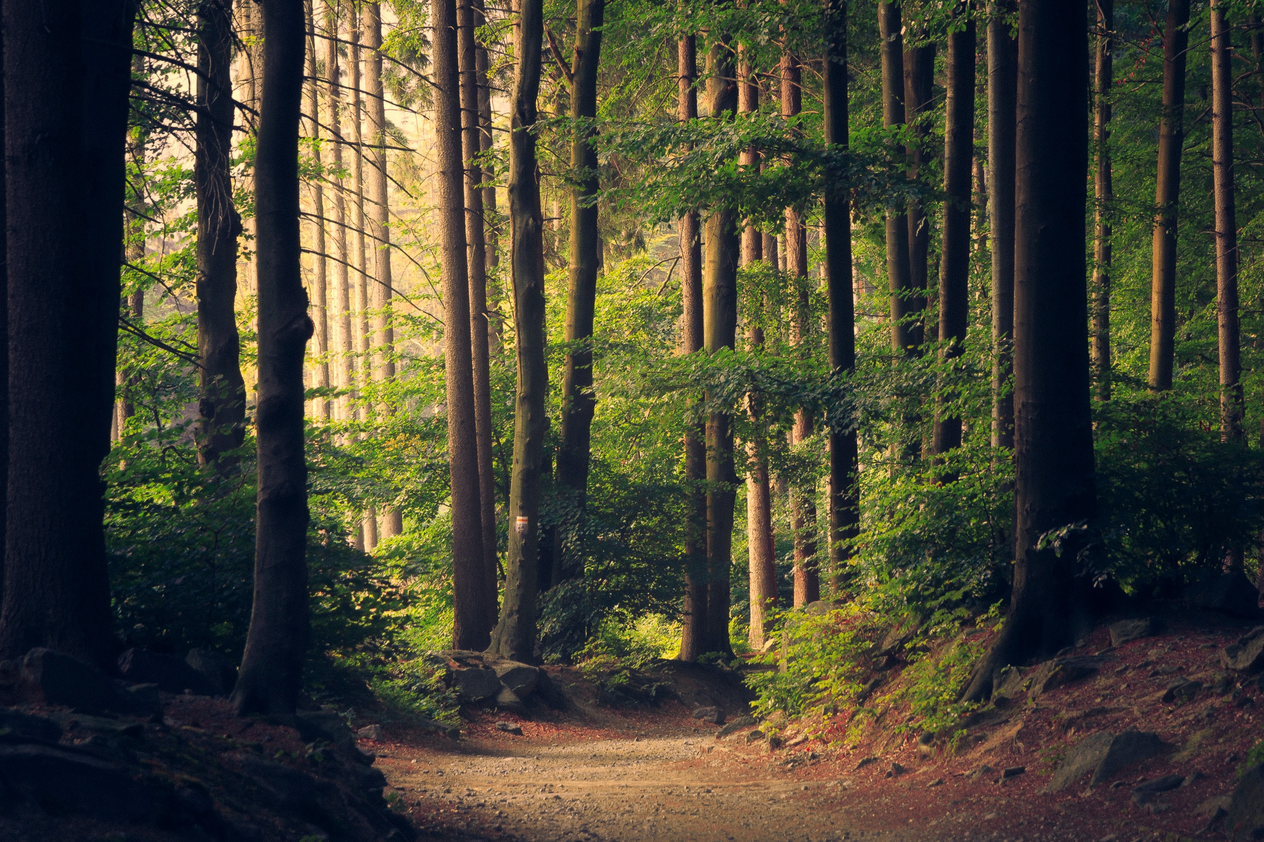 Envirotips: How to Source Wood Sustainably for Your Home